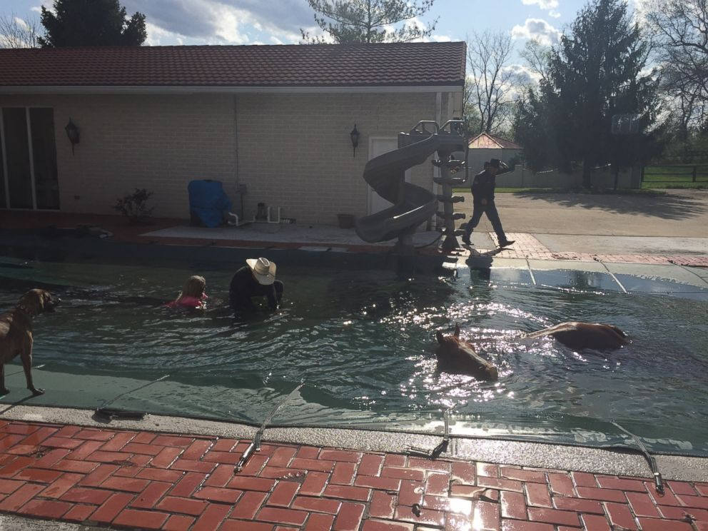 Pastor Lawrence Bishop II saves his horse trapped in the deep end of a swimming pool.