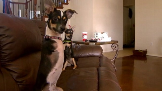 VIDEO: Moose and Maverick, born without front legs, were rescued by a veterinarian in Texas.