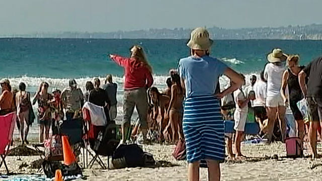 PHOTO: Beachgoers in La Jolla, California spotted a shark on the beach on July 3, 2012.