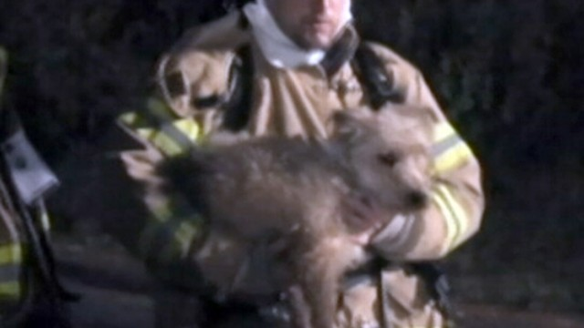 Dogs Saved From Burning House