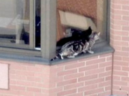 VIDEO: Lucky Cat Survives 36 story fall