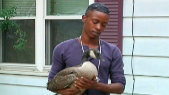 PHOTO: Jarrell Johson, 26, of Champaign, Ill., said a goose showed up on his doorstep on July 28, 2012 and hes been caring for it ever since.