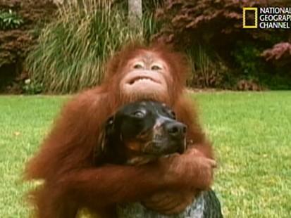 VIDEO: An orangutan and a dog