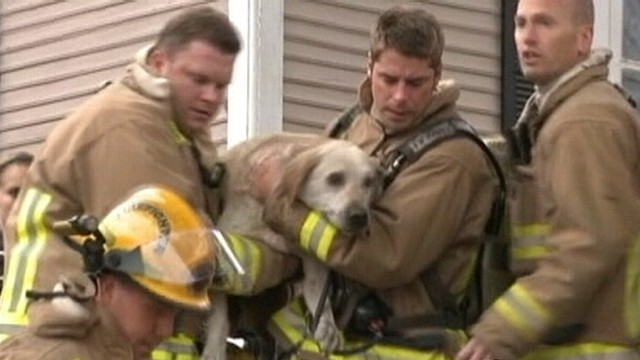 VIDEO: Wisconsin firefighters resuscitate Labrador trapped in a burning house.