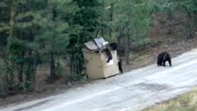 VIDEO: Shirley and Tom Schenk, help three bear cubs escape from a dumpster in Ruidoso, N.M.