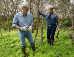 PHOTO: Sen. Bill Nelson, D-Fla., and wildlife commissioner Ron Bergeron, right, search the grassy underbrush on an island in the everglades for pythons,  Jan. 17, 2013, in the Florida Everglades.