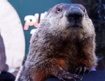 PHOTO: Groundhog Punxsutawney Phil climbs on the top hat of his handler after Phil did not see his shadow and predicting an early spring during the 127th Groundhog Day Celebration at Gobblers Knob on Feb. 2, 2013 in Punxsutawney, Pennsylvania.