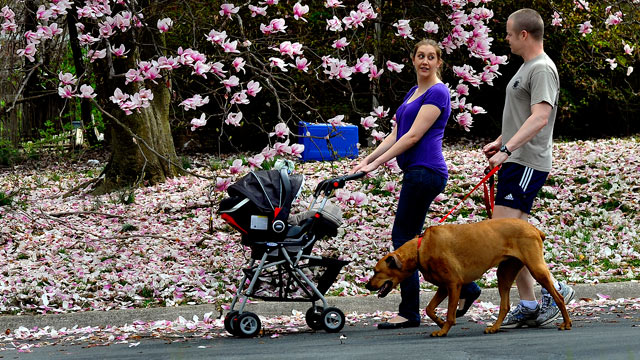 PHOTO: John and Katherine Richardson enjoy a walk with their new baby and their dog in Wheaton, Md.