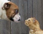 PHOTO: Dog vs. cat