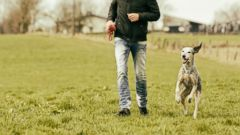 PHOTO: A stock image of a man with a dog.