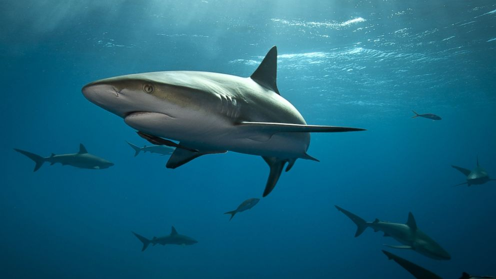 Images Of Sharks How to Stay Saf...