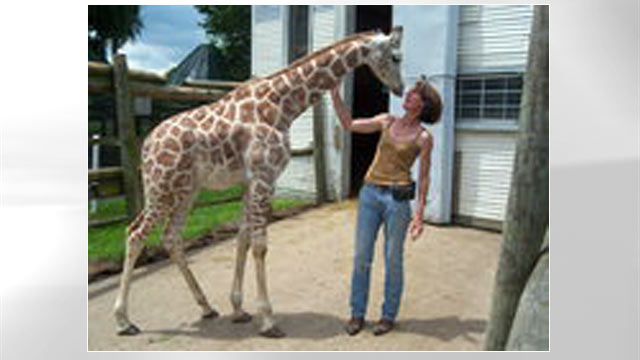 PHOTO: Bridget Sipp, owner of Animal Kingdom Zoo in Columbus, with one of the zoos giraffes, is seen in this undated file photo.