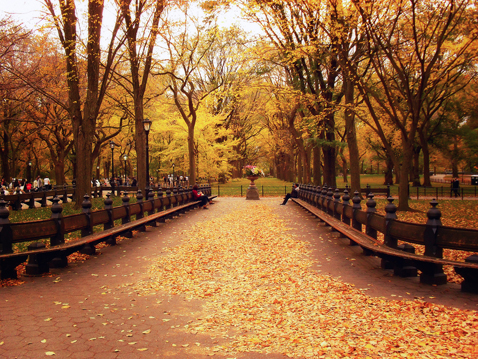 ht central park nt 121001 blog When Autumn Comes to ...