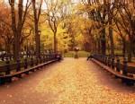 PHOTO:Central Park
