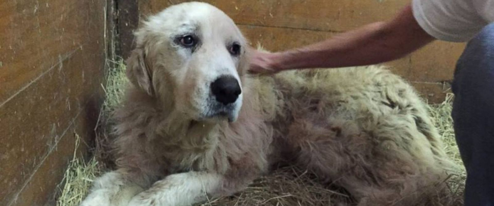 PHOTO: Emma, pictured two days after the tornado when she was rescued from the site of her former home. She was first found hiding in her dead owners arms.