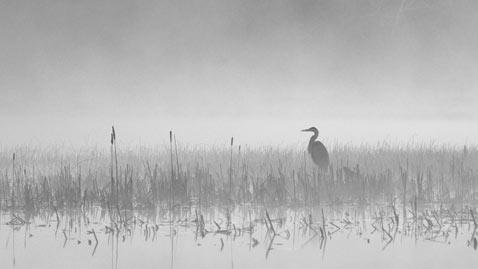 ht heron waits nt 110901 wblog Flickr Photographer: Peter Bowers
