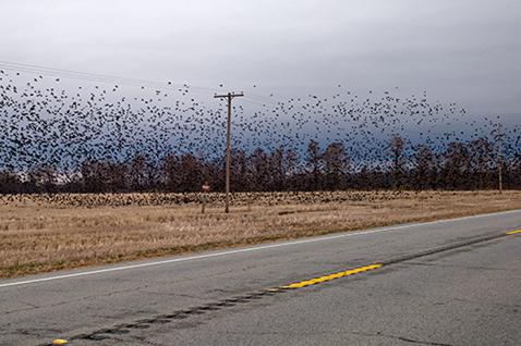 ht magdalena sole new delta rising birds lpl 121206 New Delta Rising, by Magdalena Solé