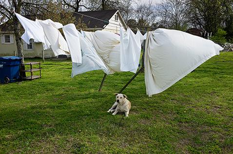 ht magdalena sole new delta rising dog lpl 121206 New Delta Rising, by Magdalena Solé