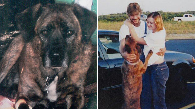 PHOTO: Texas Supreme Court is debating whether the Medlen family, pictured right, can sue for emotional damage after their dog, Avery, was mistakenly euthanized at an animal shelter in 2009.