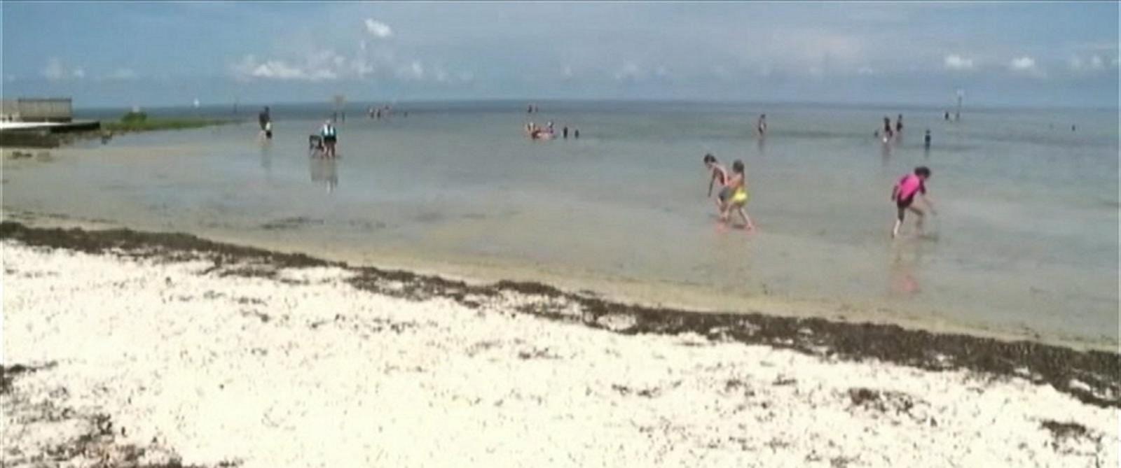 PHOTO: A screen shot from a video showing Pine Island Beach, Fla.