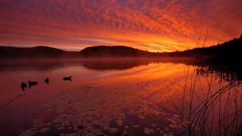 ht reeds nt 110901 wblog Flickr Photographer: Peter Bowers