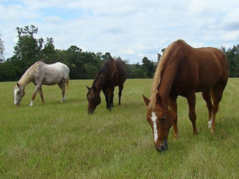 PHOTO: The 335 acre farm is home to 128 horses.