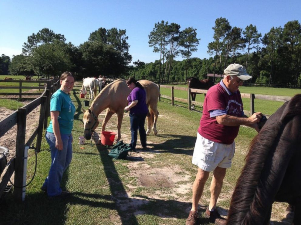 "PHOTO: Every Thursday and Saturday, volunteers come to groom the horses, which Paul Gregory calls their ""Spa Day."""