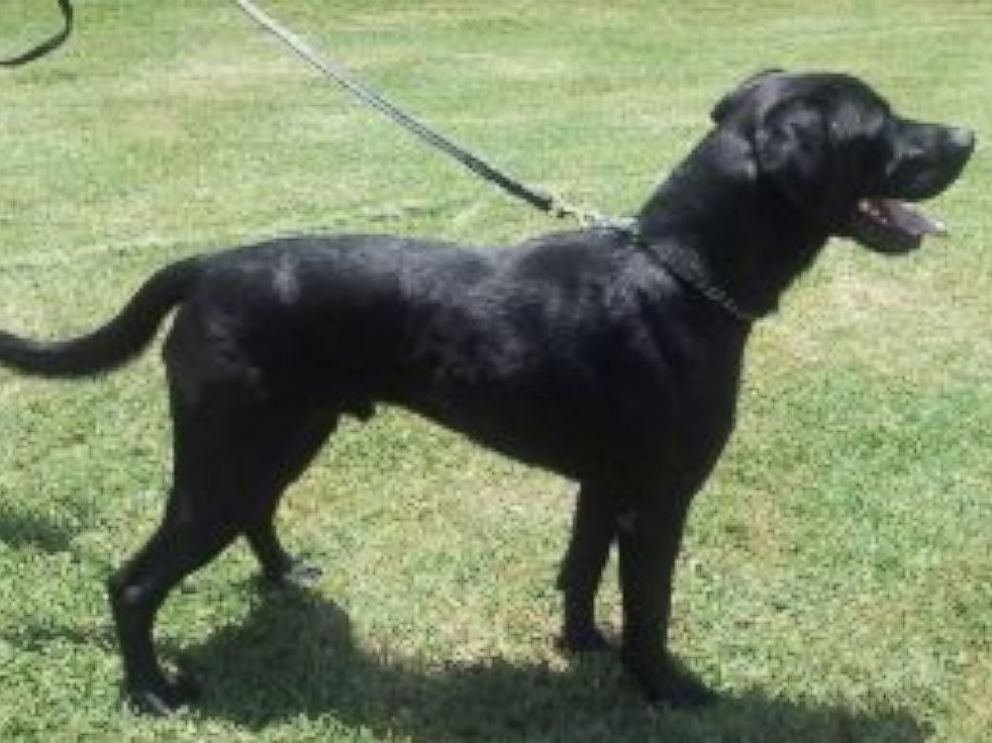 PHOTO: The TSA is looking for homes for working dogs like Bart, Zeno, and Zeux.