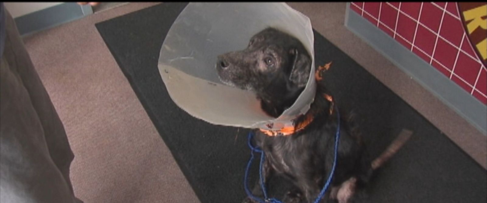 PHOTO: Adam, a dog in Indiana, was found to be allergic to humans.
