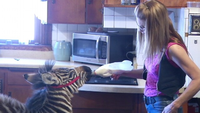 VIDEO: Arrested mans girlfriend says they treat their animals like children.