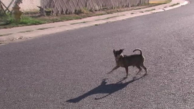 Maricopa County Animal Care and Control seeks residents help to curb Maryvales overpopulation problem.