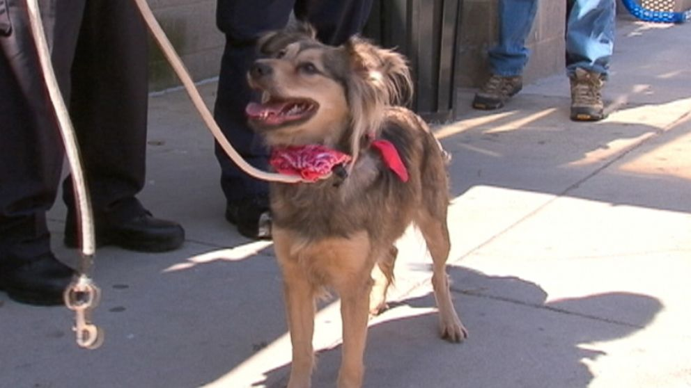 Shepherd-collie mix was unhurt after she ran alongside a Metro North train for about six miles.