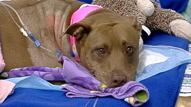 VIDEO: Lilly pulled her unconscious owner from the path of a freight train.
