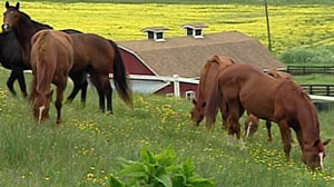 Horses/also-rans of Pimlico and Churchill Downs.