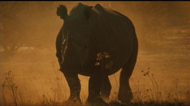 Rhino Safari Auction Triggers Backlash