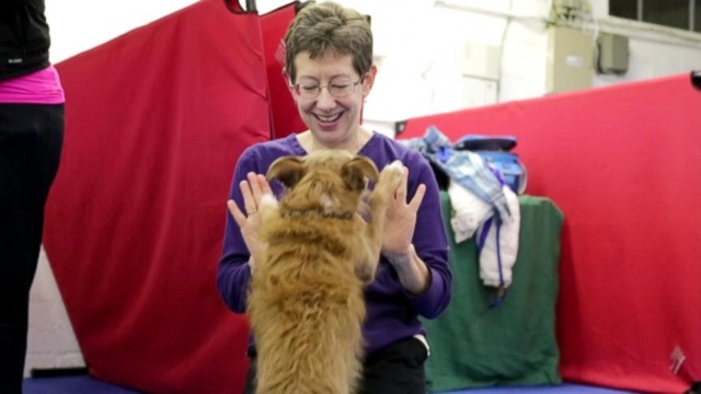VIDEO: Pure breeds and mutts compete for the first time at this prestigious event.
