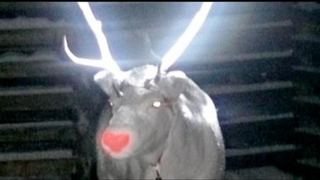 VIDEO: Instant Index: Glow in the Dark Deer