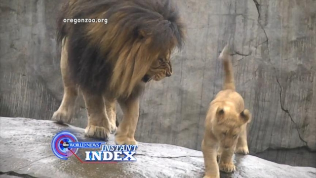 VIDEO: Instant Index: Humans, Dolphins and Lions Exhibit Comical Parenting Styles