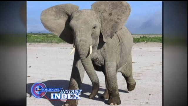 Instant Index: Elephants and Their Keen Ability to Hear for Survival