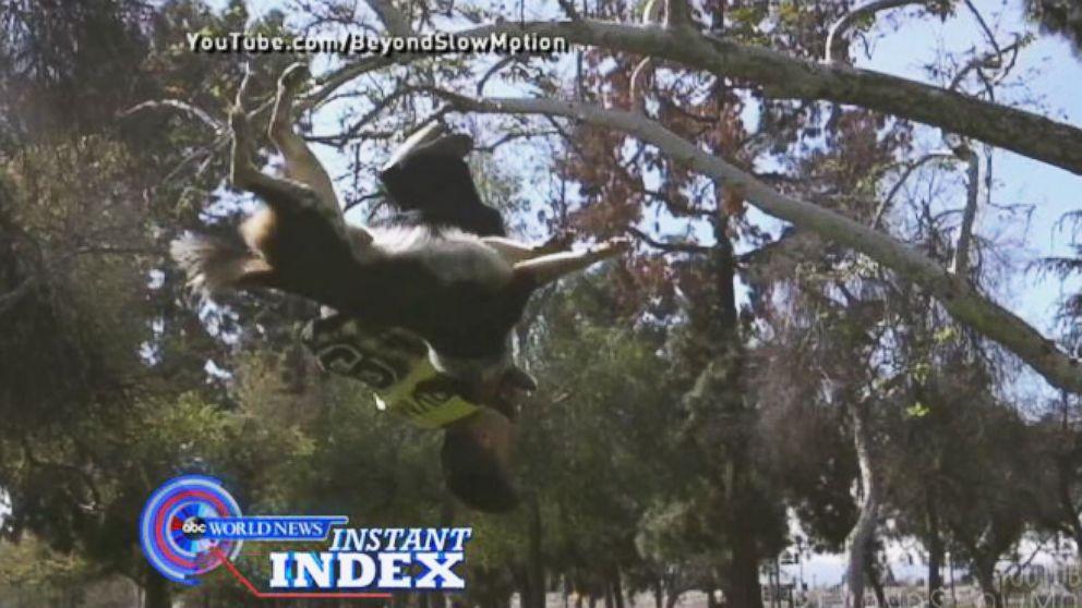 VIDEO: Meet Jumpy the Canine Acrobat
