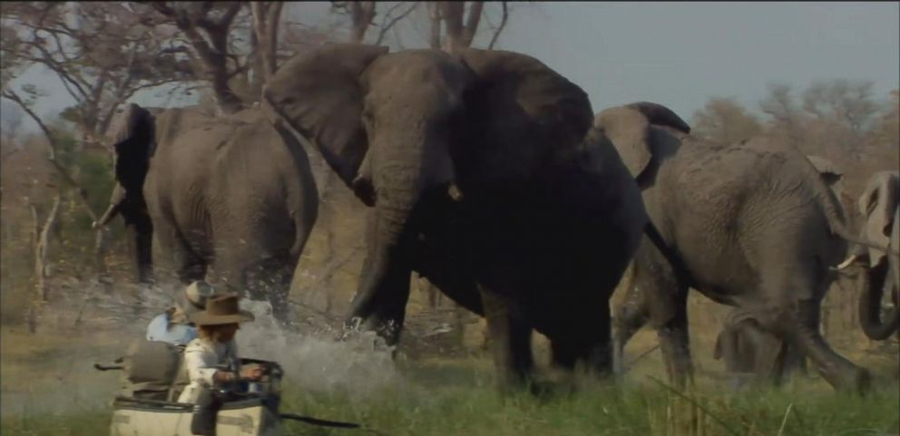 VIDEO: High School Sweethearts Dedicate Their Lives to Saving Elephants