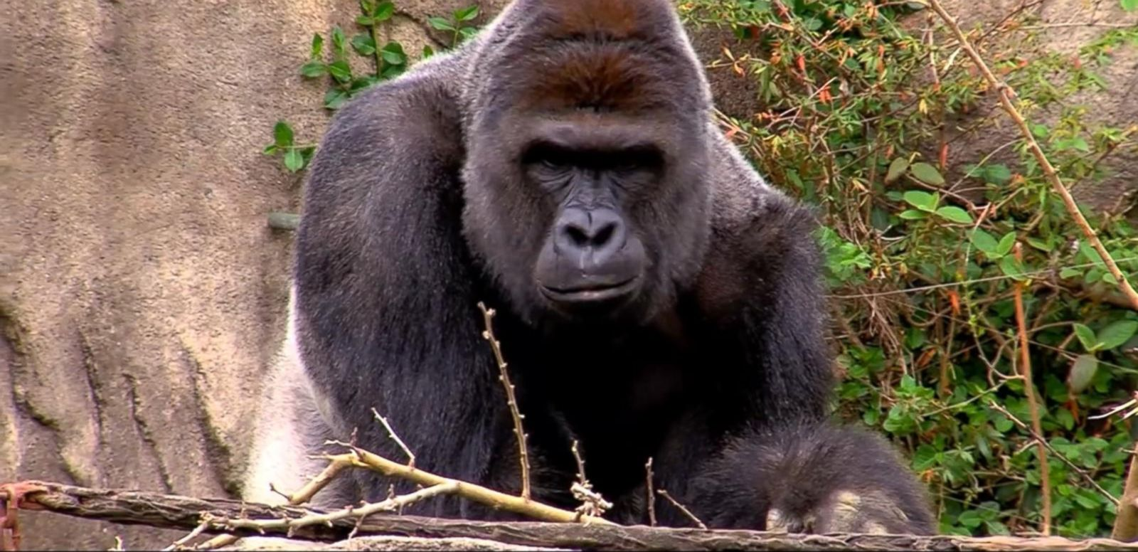 VIDEO: A Scary Encounter for a Toddler at the Cincinnati Zoo