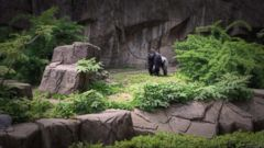 VIDEO: World News 05/30/16: Outrage Erupts After a Gorilla Is Shot and Killed at the Cincinnati Zoo