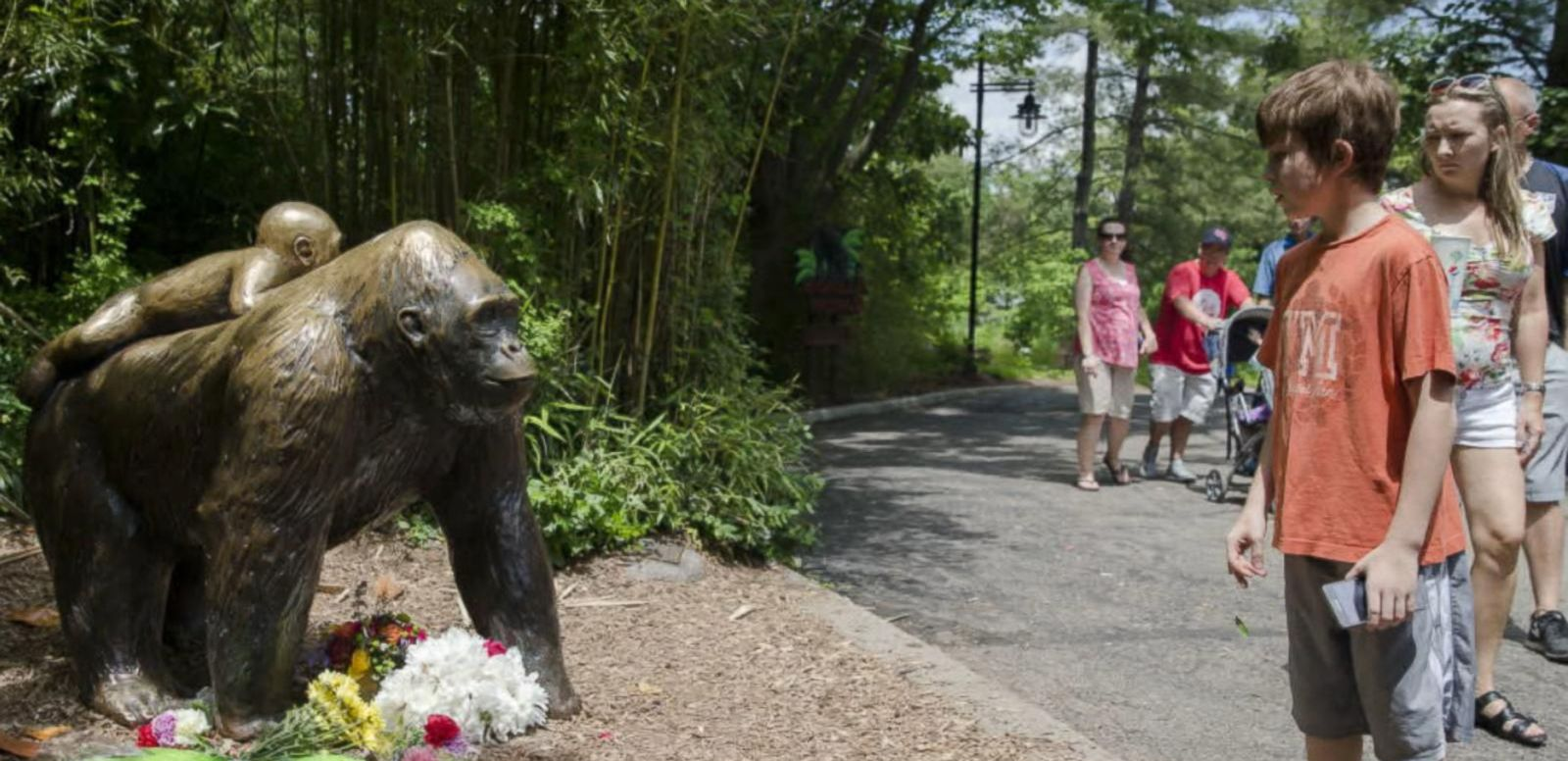 VIDEO: Outrage Erupts After a Gorilla Is Shot and Killed at the Cincinnati Zoo