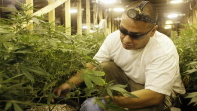 VIDEO: Oakland-area Teamsters Union taps budding medical marijuana industry.