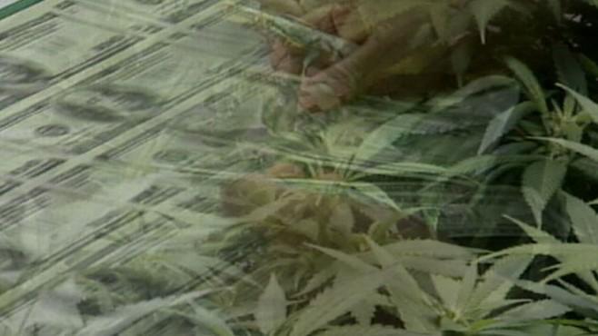 VIDEO:The Marijuana Millionaire
