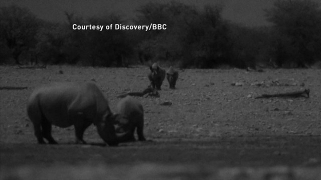 "VIDEO: Animal rituals exposed on ""AFRICA"", series premiere at 10 pm on Discovery."