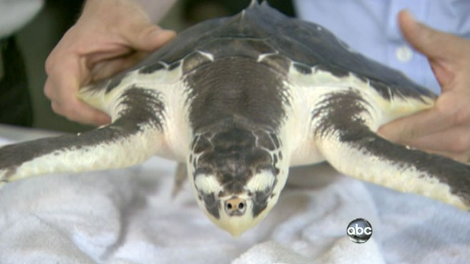 VIDEO: Gulf Wildlife, a Year After Oil Spill