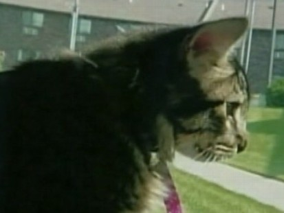 VIDEO: Cat Travels from New Mexico to Chicago