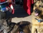 VIDEO: Adopting War Dogs